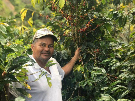 Cadena de valor del café de Briceno conectada con el mundo